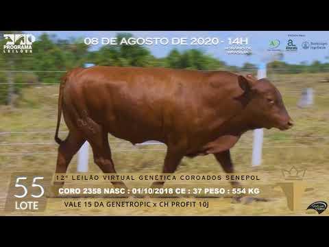 LOTE 55 CORO 2358
