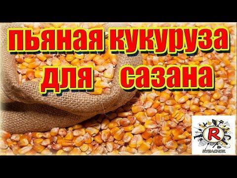 Пьяная кукуруза для ловли Сазана,Амура и карася.Простая ферментация!