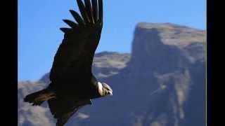 Ancient Winds - La Samaritana