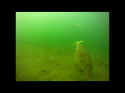 Bucktail Flounder Fishing - Underwater Drift View