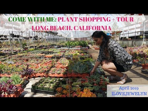 Come With Me: Plant Shopping + Tour | Long Beach, California  | April 2019 | ILOVEJEWELYN