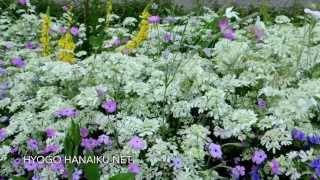 ひょうご花育ねっと 〜ナチュラル ガーデン〜 Natural Garden / 2013