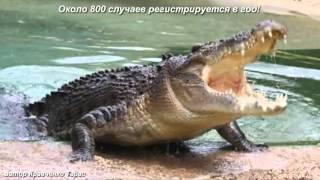 Самые опасные животные Мира! Топ 10 Самых опасных животных Мира!