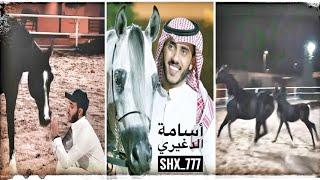 أسامة الدغيري  المهره حصه بنت الأريام تبارك الله