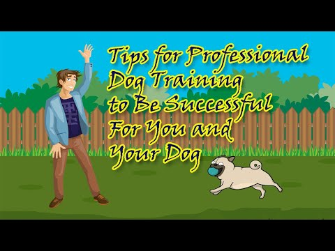 tips-for-professional-dog-training-to-be-successful-for-you-and-your-dog