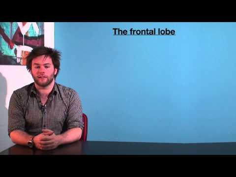 VCE Psychology - The Frontal Lobe