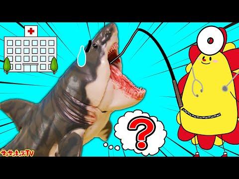 お腹が痛いよ~!海のゴミを食べちゃった!?お医者さんに変身してサメさんを助けてあげよう!キッズマナー・寸劇・親子向け知育教育★サンサンキッズTV★