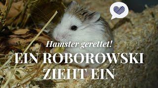 Hamster gerettet! ❤ Sep. 2016   Nana