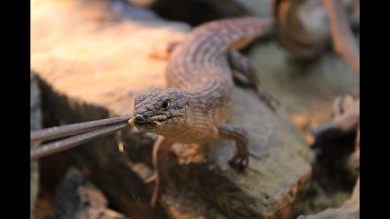 H D Reptiles Feeding All My ...