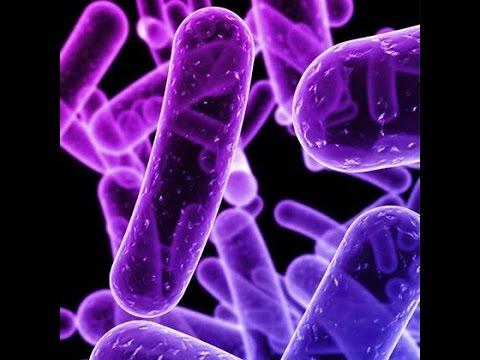 Resultado de imagen para enterobacteriaceae