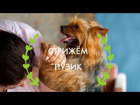 Как стричь собаку - гигиеническая стрижка