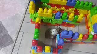 Hamster labirenti 2