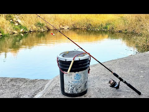 The ULTIMATE Fall Catfish Bait! (How I Catch Them)