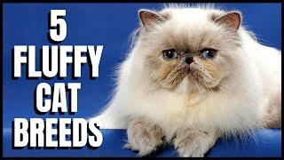 5 Fluffy Cat Breeds