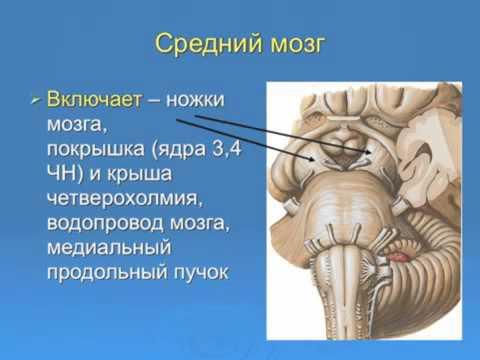 82 НЕВРОЛОГИЧЕСКИЙ Pain Clinic