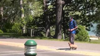 Sylvie (french Bulldog) Dog Training Boot Camp Video