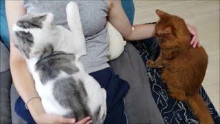 妊婦ママは猫たちにモテモテ