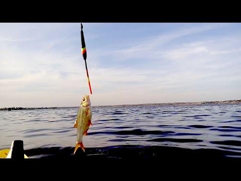 Ловля плотвы летом с лодки на перловку - YouTube