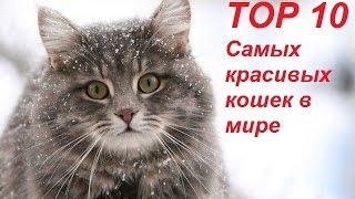 Топ 10 Самых красивых кошек в мире
