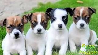 Как выбрать щенка, на ЧТО обратить внимание?