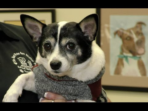 Animal Welfare League Client Testimonial for Charlotte State Bank & Trust
