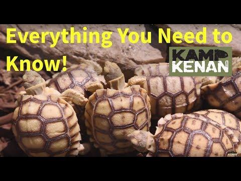 The Ultimate Sulcata Care Video : Kamp Kenan S3 Episode 34