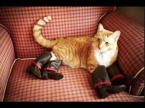 IF YOU LAUGH, YOU LOSE - Funny cat, animal Compilation 2017