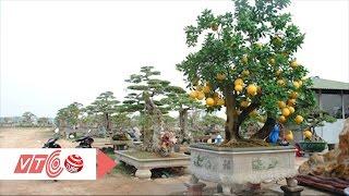 Độc: Cây bưởi diễn bonsai cổ thụ trăm triệu | VTC