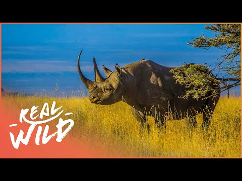 Mkomazi The Rhino [Rhino Rescue Documentary] | Wild Things