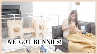 We got baby bunnies! (first day home) 🐰 7 reasons why you should not get a bunny