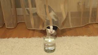 Cat and Soda