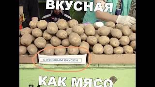 Приколы / юмор / животные / новинки 2019