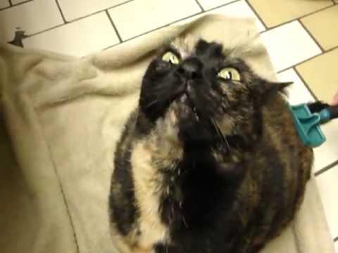 Cat making weird noises.