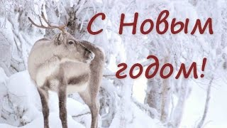 Счастливого Нового года! Новогоднее поздравление.