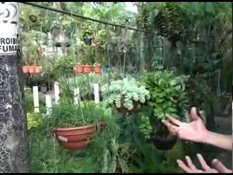 Saiba quais as plantas ideais para a montagem de um jardim vertical