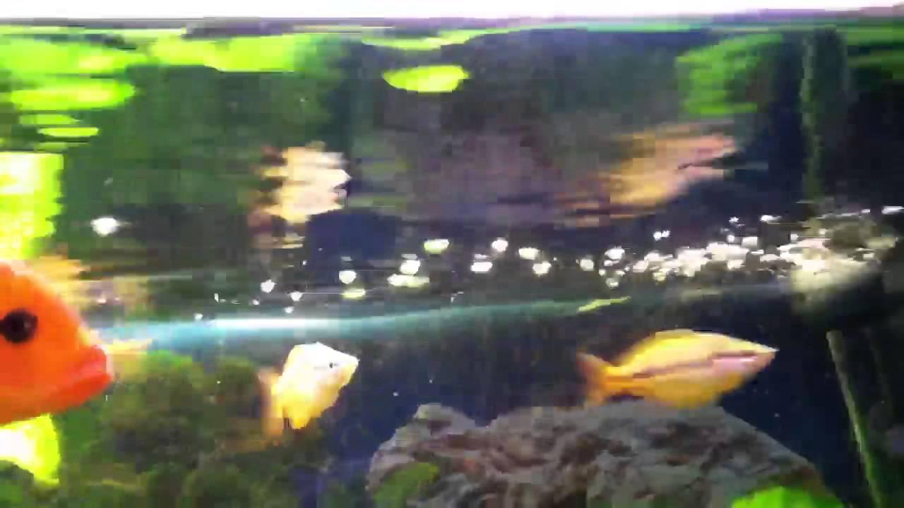 Fliege stirbt fische fressen fliege malawis youtube for Fressen kois kleine fische