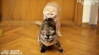 🦁 Funniest Animals 🐼 - Try Not To Laugh 🤣 - Funny Cats mating Animals' Life
