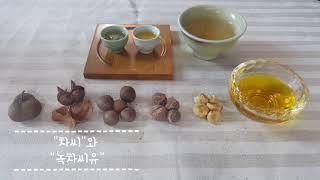 [다오티푸드] 차씨, 녹차씨유 소개(tea seed, …