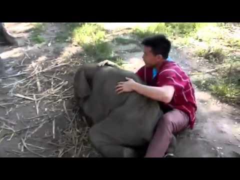 Маленький слоненок...