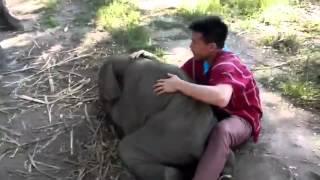 Маленький слоненок соскучился по этому парню