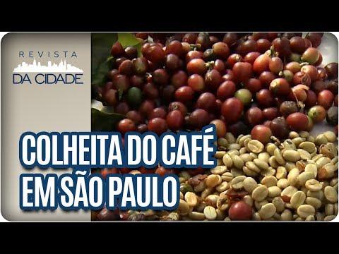 Dia Nacional do Café: Como é a colheita do Café? - Revista da Cidade (24/05/17)