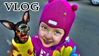 VLOG Варя Гуляет с Тасей. Уже Весна. Хорошая Погода. щенок блог собака жизнь