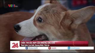 Cuộc thi sắc đẹp của những chú chó | VTV24