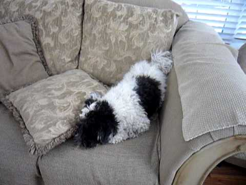 dog digging couch