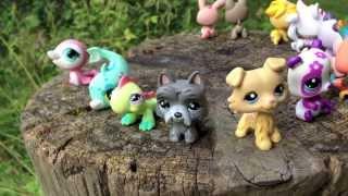 Pet Shop City - 1 серия - Наше Лето