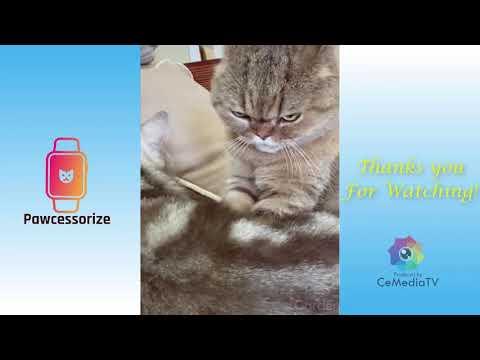 best-online-pet-store---pawcessorize.com