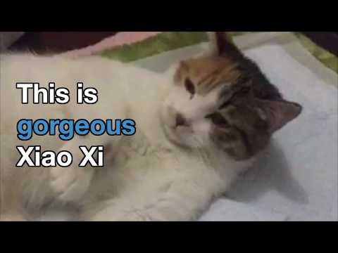 Chinese Kitten abandoned for being disabled now knows she's just perfect