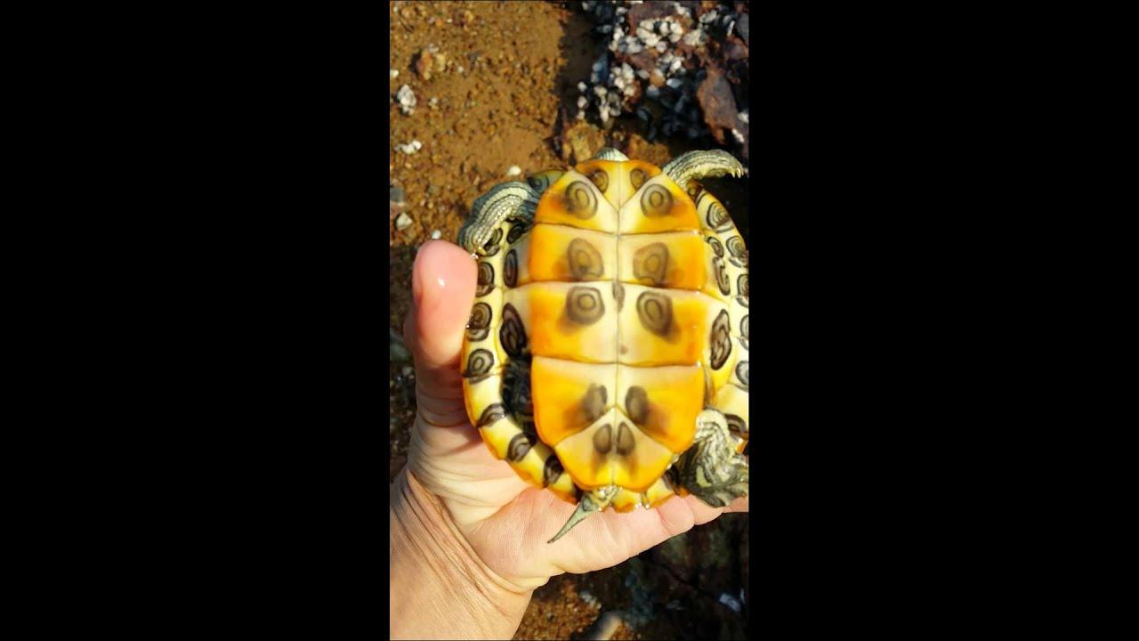 放生烏龜 - YouTube