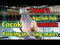Suara Perkutut Panggilan Ampuh Cocok Untuk Terapi  Mp3 - Mp4 Download
