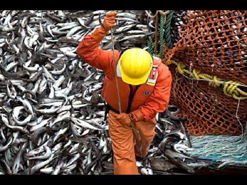 Alaskan Fishing: Finding the Best Fishing Ground - Classic Documentary